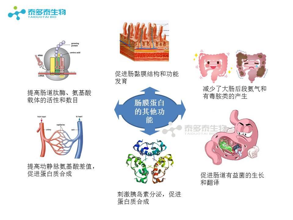 消化 器 管