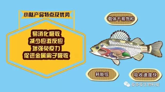 渔利肽——水产动物蛋白饲料新品